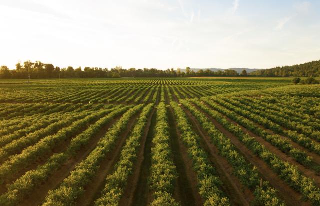 agricult_news